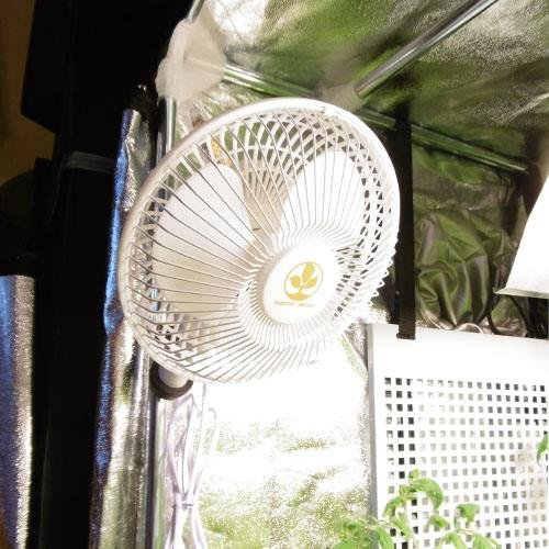 Secret Jardin Monkey Fan Clipventilator