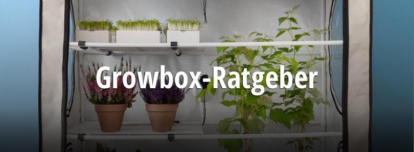 growbox ratgeber